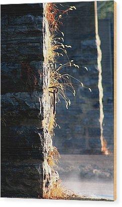 Steady Does It Wood Print by Roberta  Gennaci-Attalla