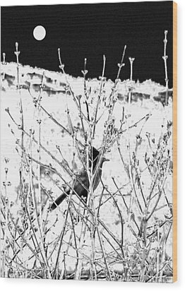 Stellar Jay   Wood Print by Will Borden
