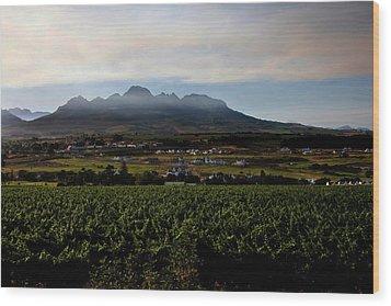 Stellenbosch Vineyard Wood Print by Dale Halbur