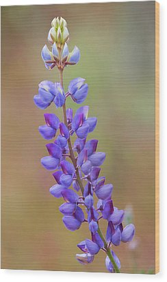 Wood Print featuring the photograph Stem Of Lupines by Ram Vasudev
