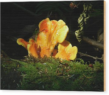 Sticky Fungus Wood Print by Klee Miller