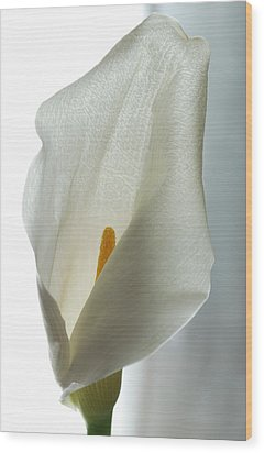 Still Life Calla Wood Print