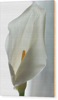 Still Life Calla Wood Print by Terence Davis