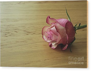 Still Life, Macro Photo Of Pink Rose Flower Wood Print by Pixelshoot Photography