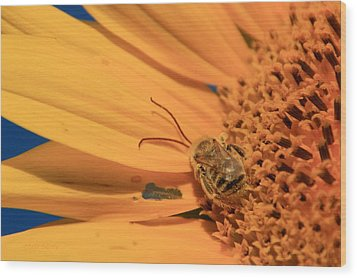 Wood Print featuring the photograph Still Sleeping by Chris Berry