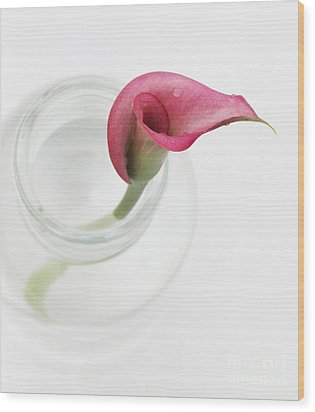Stillness Wood Print by Amanda Barcon
