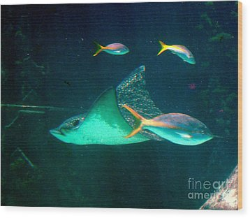 Wood Print featuring the photograph Sting Ray by Gary Wonning