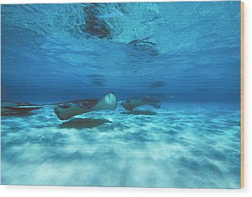 Stingray City Underwater With Stingrays Wood Print by James Forte