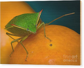 Stink Bug On Kumquats Wood Print by Warren Sarle