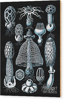 Wood Print featuring the drawing Stinkhorn Mushrooms Vintage Illustration by Edward Fielding
