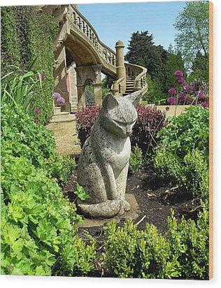 Stone Cat Wood Print by Patrick J Murphy