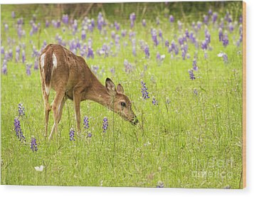 Stop And Smell The Bluebonnets. Wood Print