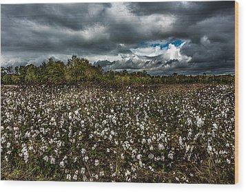 Stormy Cotton Field Wood Print