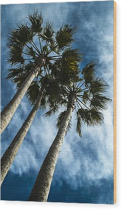Stormy Palms 1 Wood Print