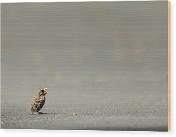 Story Of The Baby Chipping Sparrow 3 Of 10 Wood Print by Joni Eskridge