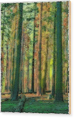 Straight And Tall Wood Print by Michael Cleere
