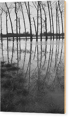 Stranded Trees Wood Print by Hazy Apple