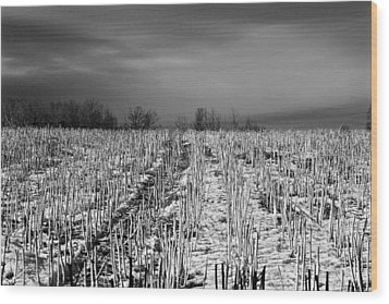 Straw Fields Wood Print
