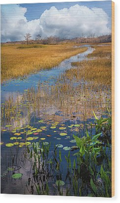 Wood Print featuring the photograph Stream Through The Everglades by Debra and Dave Vanderlaan