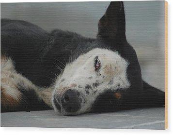 Street Dog Wood Print