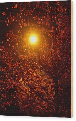 Streetlamp Through Tree Wood Print by Utopia Concepts