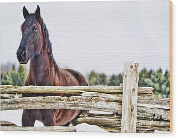 Wood Print featuring the photograph Strength by Traci Cottingham