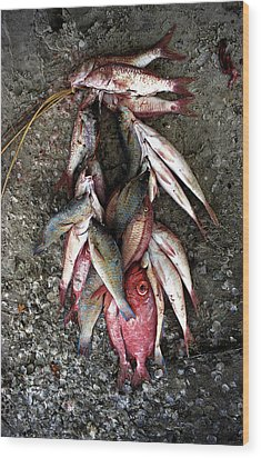 Stringer Of Fish Wood Print by Marcus Best