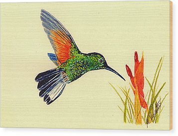 Stripe Tailed Hummingbird Wood Print by Michael Vigliotti
