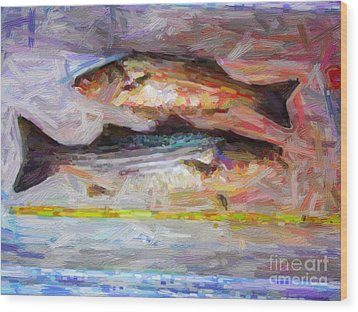 Striped Bass Keepers Wood Print by Wingsdomain Art and Photography
