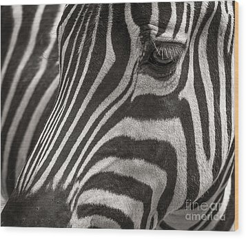 Striped Beauty Wood Print