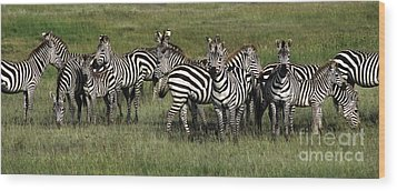 Stripes - Serengeti Plains Wood Print by Craig Lovell