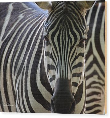 Stripes Wood Print by Maria Urso