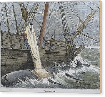 Stripping Whale Blubber Wood Print by Granger