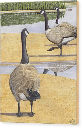 Struttin Thier Stuff Wood Print by Catherine G McElroy