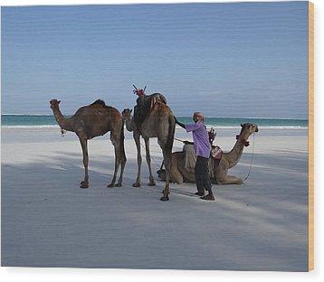 Stubborn Wedding Camels Wood Print