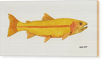 Study Of A Golden Rainbow Trout Wood Print