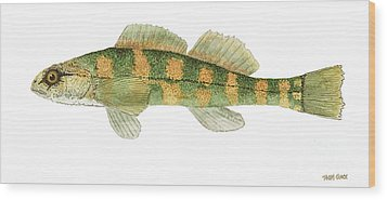 Study Of A Green Sided Darter Wood Print