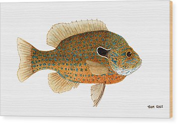 Wood Print featuring the painting Study Of A Longear Sunfish by Thom Glace