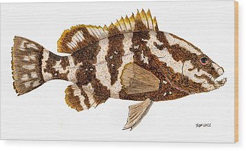 Wood Print featuring the painting 'study Of A Nassau Grouper' by Thom Glace