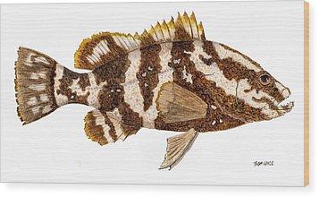 'study Of A Nassau Grouper' Wood Print