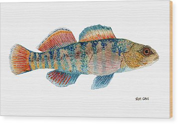Wood Print featuring the painting Study Of A Rainbow Darter by Thom Glace