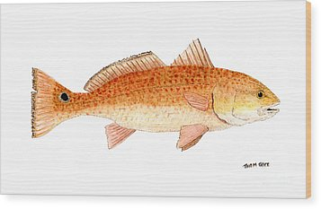 Wood Print featuring the painting Study Of A Redfish  by Thom Glace