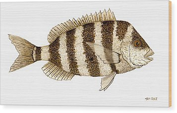 Wood Print featuring the painting 'study Of A Sheepshead' by Thom Glace