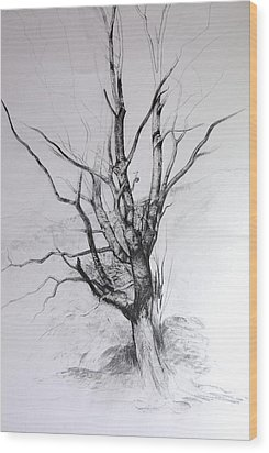 Wood Print featuring the drawing Study Of A Tree by Harry Robertson
