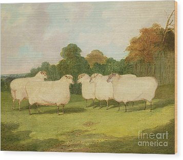 Study Of Sheep In A Landscape   Wood Print by Richard Whitford
