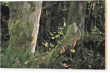 Stump Wyeth Wood Print by Larry Darnell