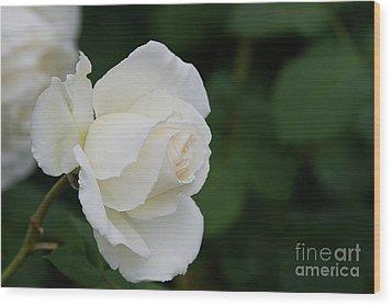 Stunning White Tineke Rose Wood Print