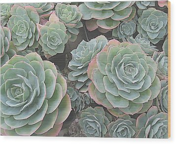 Succulent 2 Wood Print by David Hansen