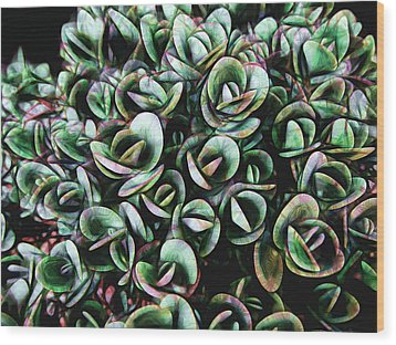 Succulent Fantasy Wood Print by Ann Powell