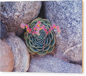Succulent Flowers Wood Print by Mark Barclay